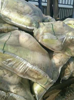 山西太原青皮萝卜 1~1.5斤 长萝卜,圆萝卜