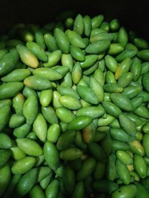四川泸州橄榄鲜青果产地批发 9g以上 电话18228951566
