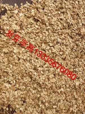安徽亳州谯城区亳州白芷 白芷种子一斤有多少粒