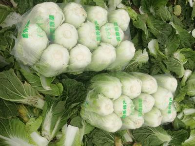 湖南岳阳韩国黄心白菜 3~6斤 净菜