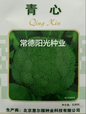 湖南省常德市鼎城区西兰花种子 种子