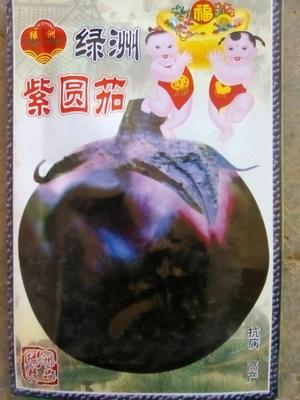 内蒙古自治区赤峰市元宝山区茄子种子