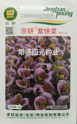 湖南省常德市鼎城区紫色快菜种子 种子