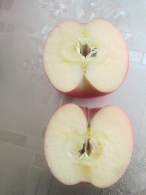 宁夏中卫冰糖心苹果 纸+膜袋 全红 80mm以上