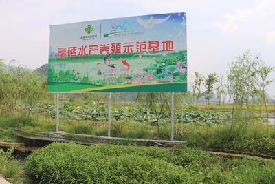 广西来宾草鱼 1-1.5公斤 人工养殖