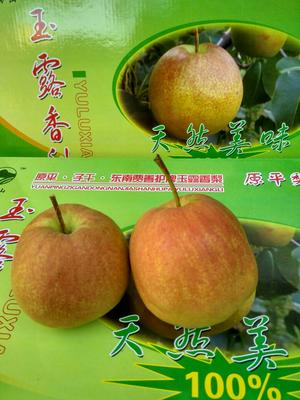 山西省忻州市原平市玉露香梨 250-300g 75mm以上