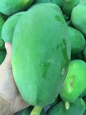 广西南宁红心木瓜 1 - 1.5斤 5斤泡沫箱装包邮
