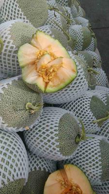 这是一张关于西州蜜25号 3斤以上 哈密瓜,新疆特产的产品图片