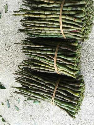 广西来宾铁皮石斛