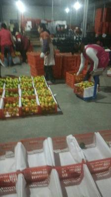 这是一张关于宜昌蜜桔 6 - 6.5cm 2 - 3两的产品图片