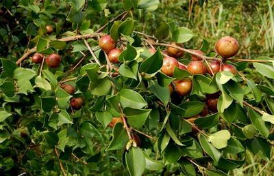 广西柳州茶叶籽油