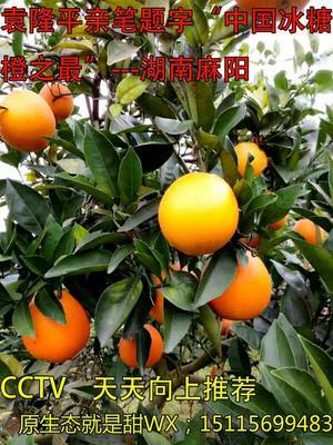 这是一张关于冰糖橙 55 - 65mm 4两以下的产品图片