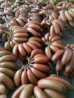 福建漳州红香蕉 七成熟
