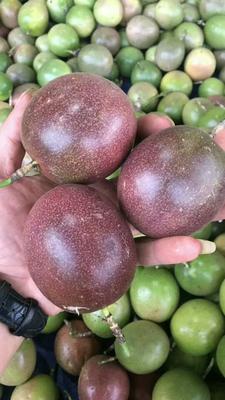 这是一张关于台农一号百香果 70 - 80克的产品图片