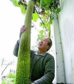广东省广州市天河区丝瓜种子