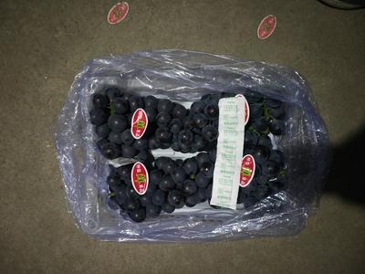 辽宁锦州巨峰葡萄 1-1.5斤 5%以下 1次果