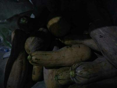 湖北恩施土谢花面南瓜 2~4斤 长条形