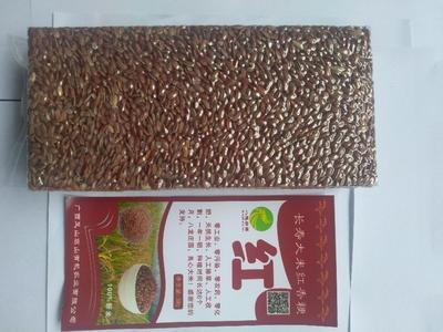 广西河池富硒红米