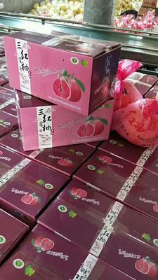 湖北宜昌红心柚 2.5斤以上