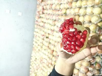 这是一张关于临潼石榴 0.6 - 0.8斤的产品图片