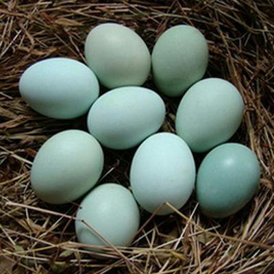 河北邯郸乌鸡蛋 箱装 食用 孕妇儿童宝宝专用鸡蛋