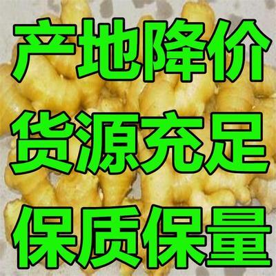 这是一张关于老姜 水洗 6两以上 生姜批发 老姜批发 黄姜批发 产地直销的产品图片