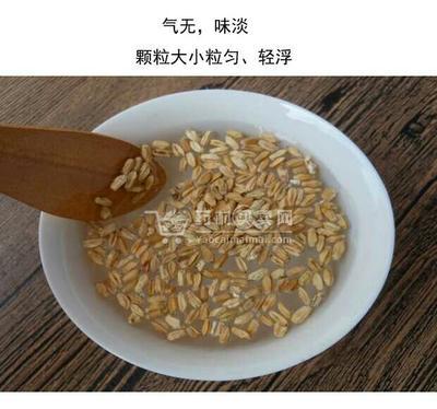 安徽亳州瘪小麦