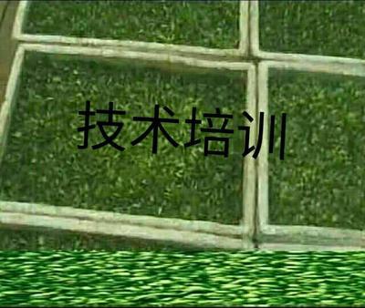 这是一张关于黑豆苗 散装 15-20cm的产品图片