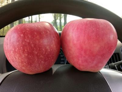 这是一张关于红星苹果 80mm以上 纸袋 全红的产品图片