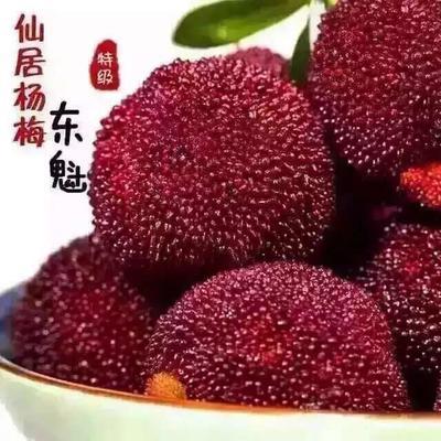 浙江台州东魁杨梅 3 - 4cm