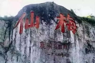 浙江台州仙居县仙居杨梅 3 - 4cm