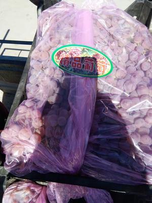河北张家口龙眼葡萄 1.5- 2斤 5%以下 1次果 葡萄 龙眼葡萄