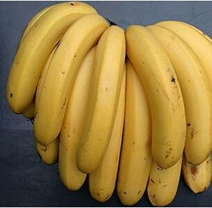 广东阳江广东香蕉1号 40 - 50斤 七成熟
