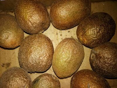 这是一张关于猕猴桃实生苗 实生苗的产品图片
