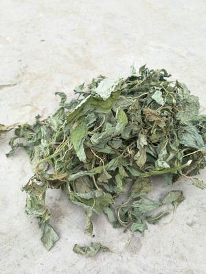 河北省邯郸市大名县干苋菜 10-15cm 鲜绿