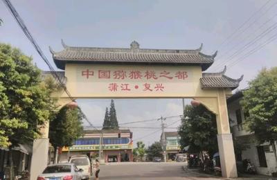 四川成都红心猕猴桃 红心 80~100克