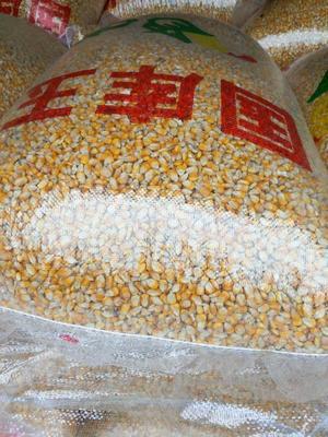 重庆玉米干粮 净货 霉变≤1%