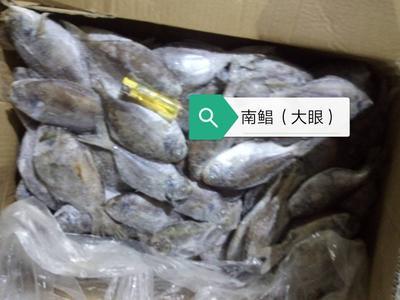 广西北海肉鯧鱼 野生 0.5公斤以下