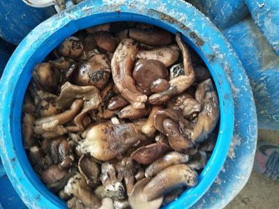 内蒙古自治区呼伦贝尔市阿荣旗腌制牛肝菌