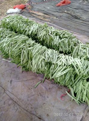 河北邯郸扁青芸豆 15cm以上 1cm以上