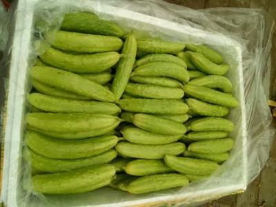 这是一张关于白玉黄瓜 18~22cm 鲜花带刺的产品图片