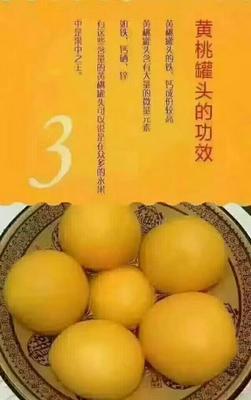安徽宿州黄桃罐头 6-12个月