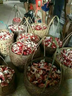 广东珠海干红蘑菇 1年以上 散装 今年五月摘的,保质一年