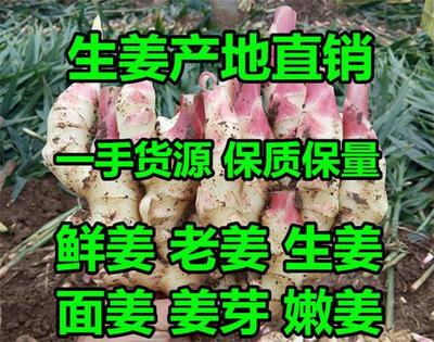 这是一张关于黄姜 4两以上 水洗的产品图片