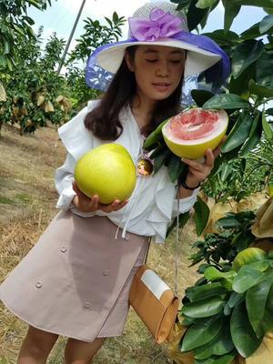 福建漳州红心柚 2斤以上 5斤左右2个装20.9元包邮