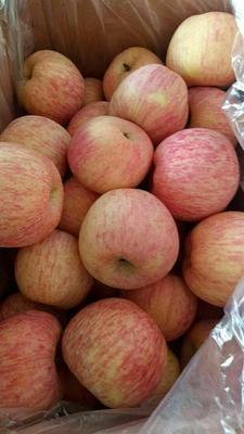 这是一张关于冰糖心苹果 75mm以上 纸袋 条红的产品图片