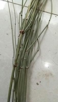 甘肃省天水市麦积区麻黄