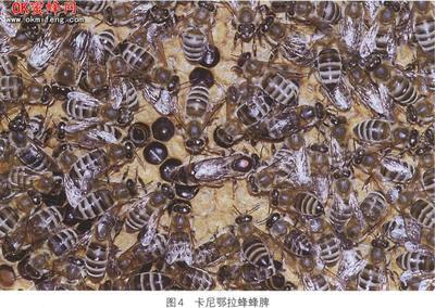 江西省宜春市靖安县卡蜂
