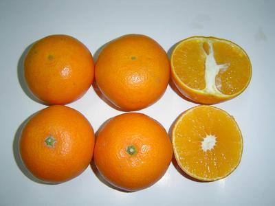 这是一张关于普早蜜桔 6.5 - 7cm 2 - 3两的产品图片
