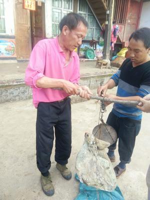 云南保山农家自制腊火腿 1年以上 散装